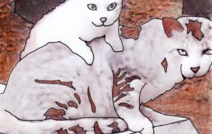 皆既日食と猫 - みぎい@
