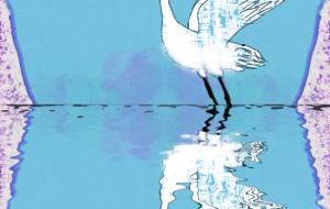 白鳥の森:ネットスクウェア年賀状2020 - 相田朋子