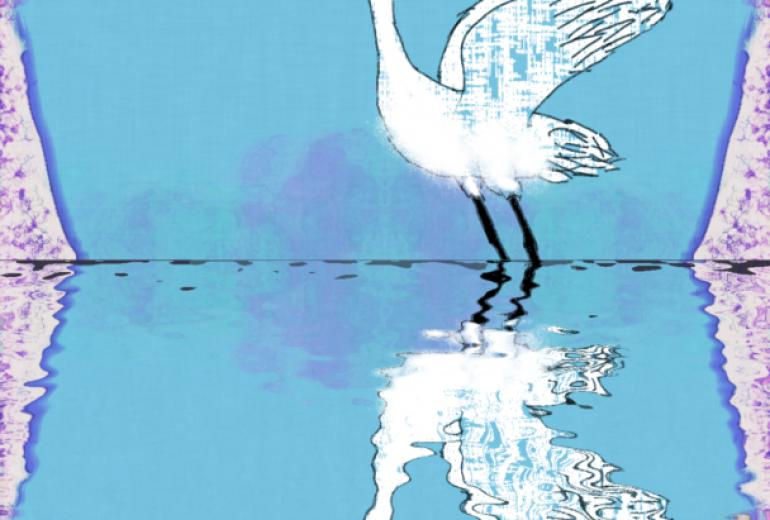 白鳥の森:ネットスクウェア年賀状2020