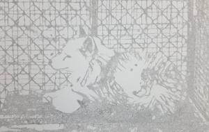 白ギツネ - miku.A