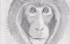 日本猿 スケッチ - 道人