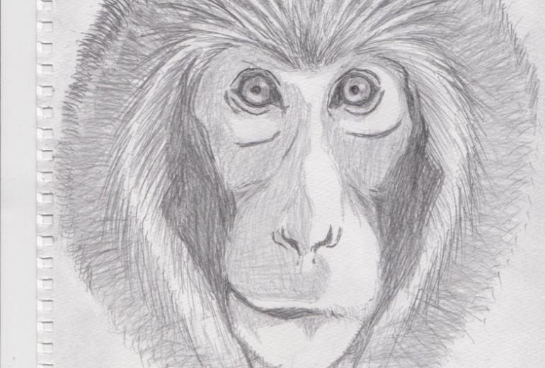 日本猿 スケッチ