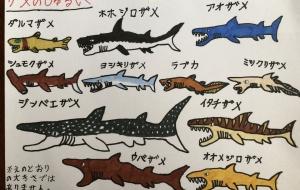 サメのしゅるい - ソーヤ
