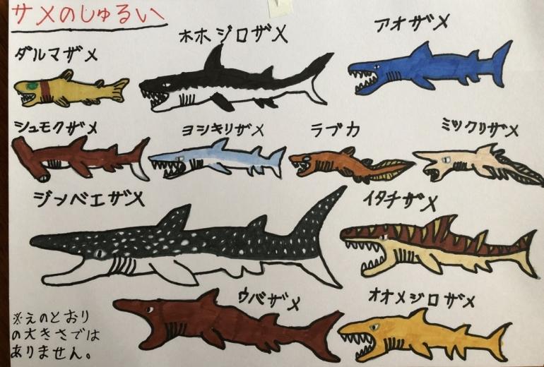 サメのしゅるい
