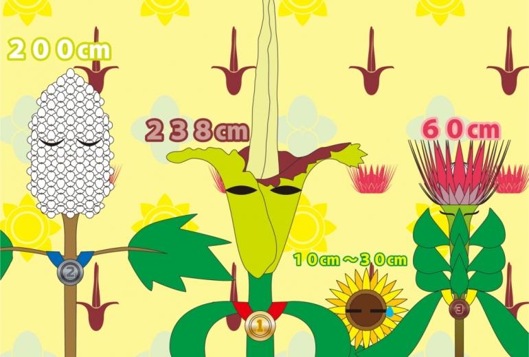 大きくて長い花のランキング