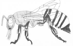 スズメバチ - TATSUO