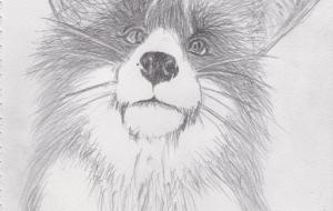 狐 スケッチ - 道人