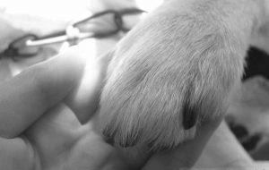 犬・握手 - M・AYAKA