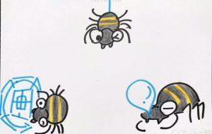 クモの1日 - クルミ