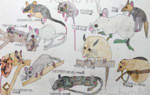 TATSUO ネズミ - 可能性アートプロジェクト 2020