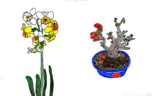 日本水仙と木瓜(ボケ)の盆栽 - SAYAKA