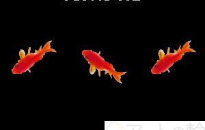 金魚三兄弟 - ナリタマサヒロ