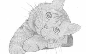 猫 - 伊藤恵美里