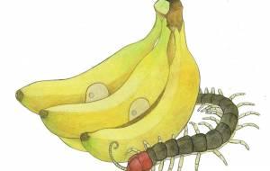 バナナ - 伊藤恵美里