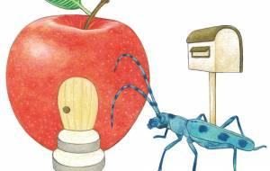 りんご - 伊藤恵美里