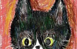 ハチワレ猫 - かいこ