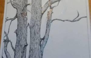 木立ち - 繭