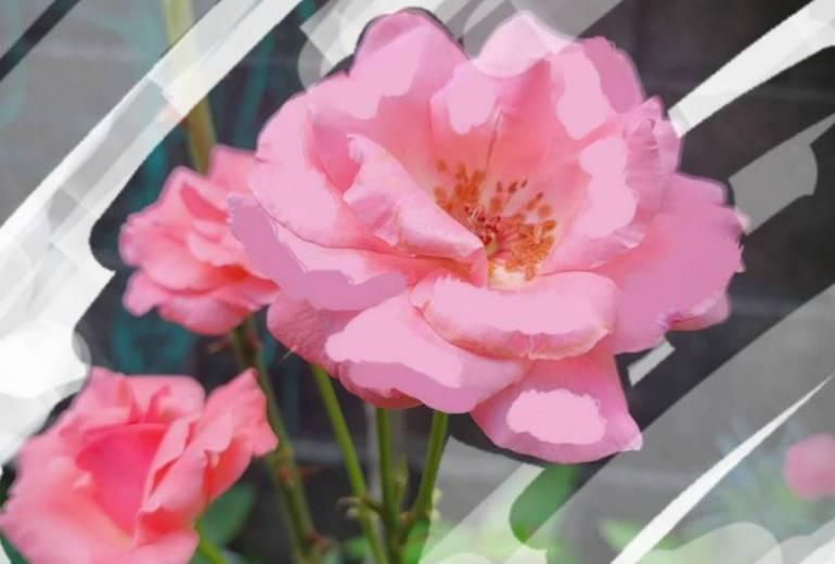 バラのうた